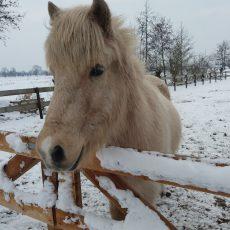Even voorstellen: onze pony`s